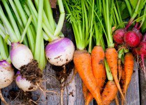 Debbie Steinbock Holistic Nutrition
