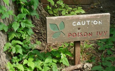 Your Complete Guide to Poison Ivy: How to Spot It, Prevent It & Treat It